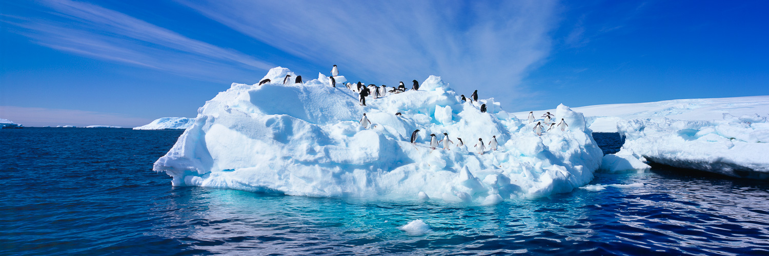 Adelie penguins on an iceberg under a bright blue sky in Antarctica.