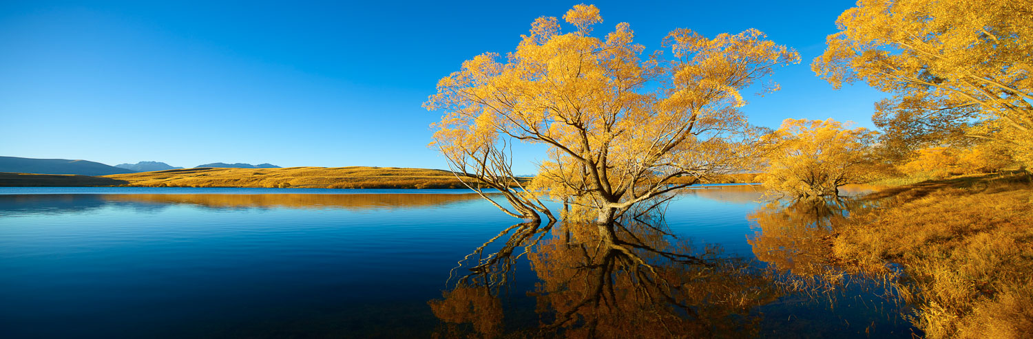 Golden autumn trees in Lake McGregor, south island, New Zealand.