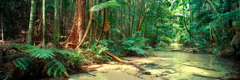 The crystal clear waters of Wanggoolba Creek winding through the tropical rainforest on Fraser Island, Qld, Australia.