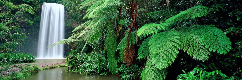 Milla Millaa Falls, Qld, Australia.