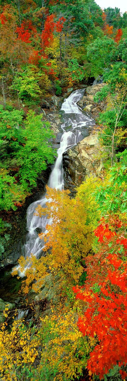 Lush greens and bright autumn foliage framing the thin ribbon of White Oak Falls, Virginia, USA.