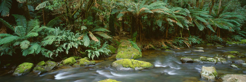 Aire River flowing through the rainforest, Cape Otway, Victoria, Australia
