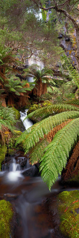 Bindaree Falls, Victoria, Australia, cascading over rocks amidst tranquil bushland.