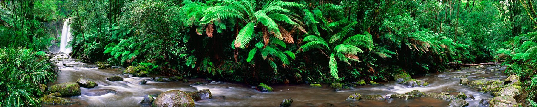 Hopetoun Falls flowing gracefully through the lush vegetation of the Otway Ranges, Victoria, Australia.