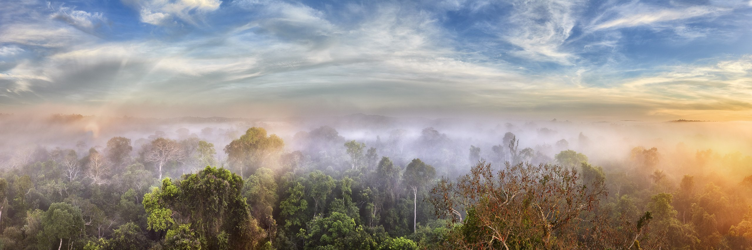 Sunrise through the mist over the Amazon jungle in Brazil.