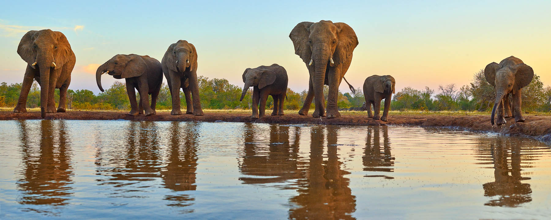 A herd of elephants drinking from the waterhole at sunset, Mashatu Game Reserve, Botswana, Africa.