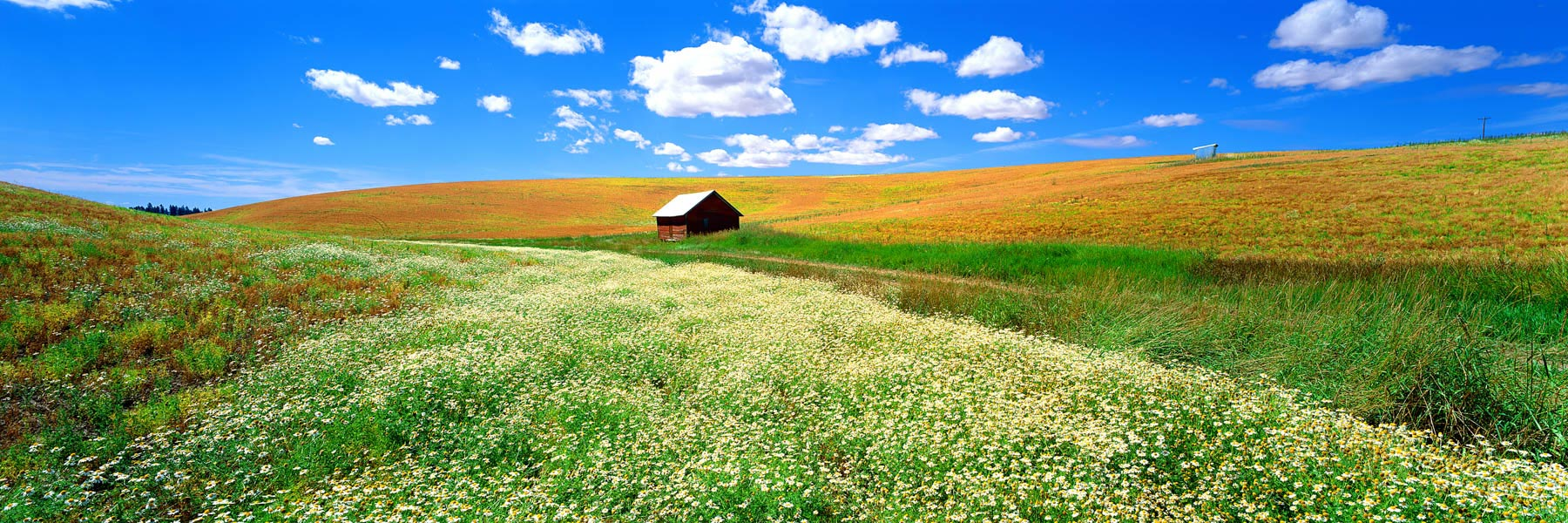 A field of wildflowers on a hillside, Idaho, USA,