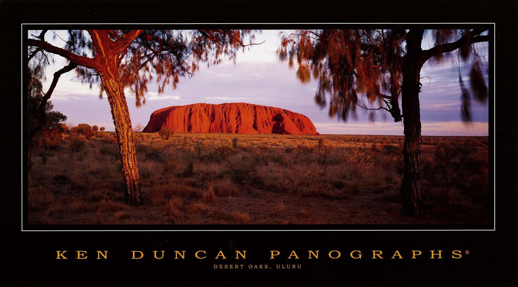 Desert Oaks, Uluru
