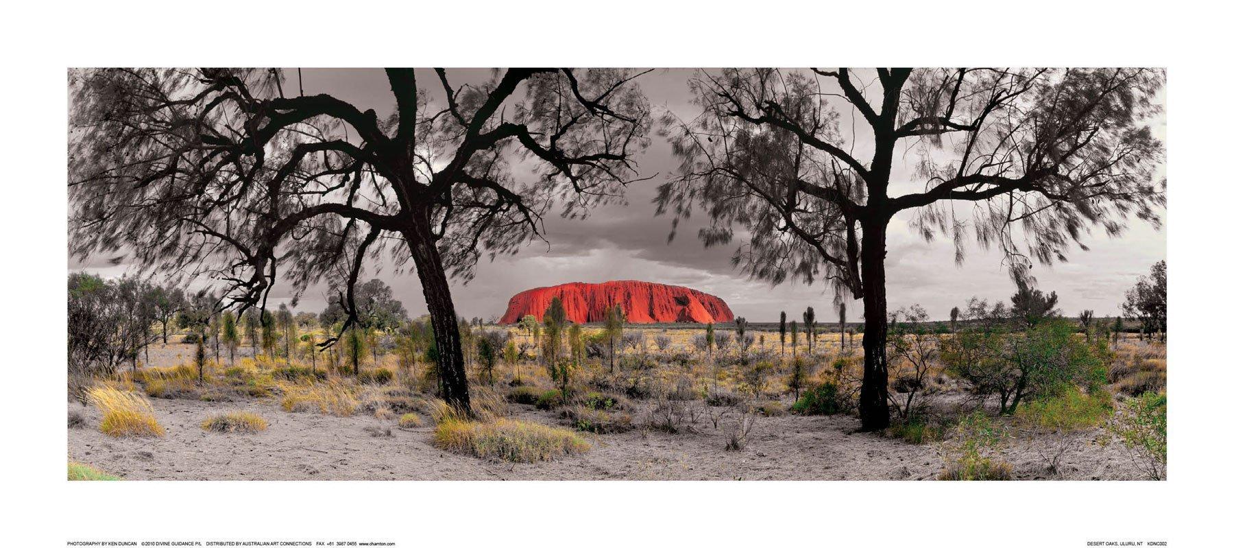 Desert Oaks, Uluru, NT