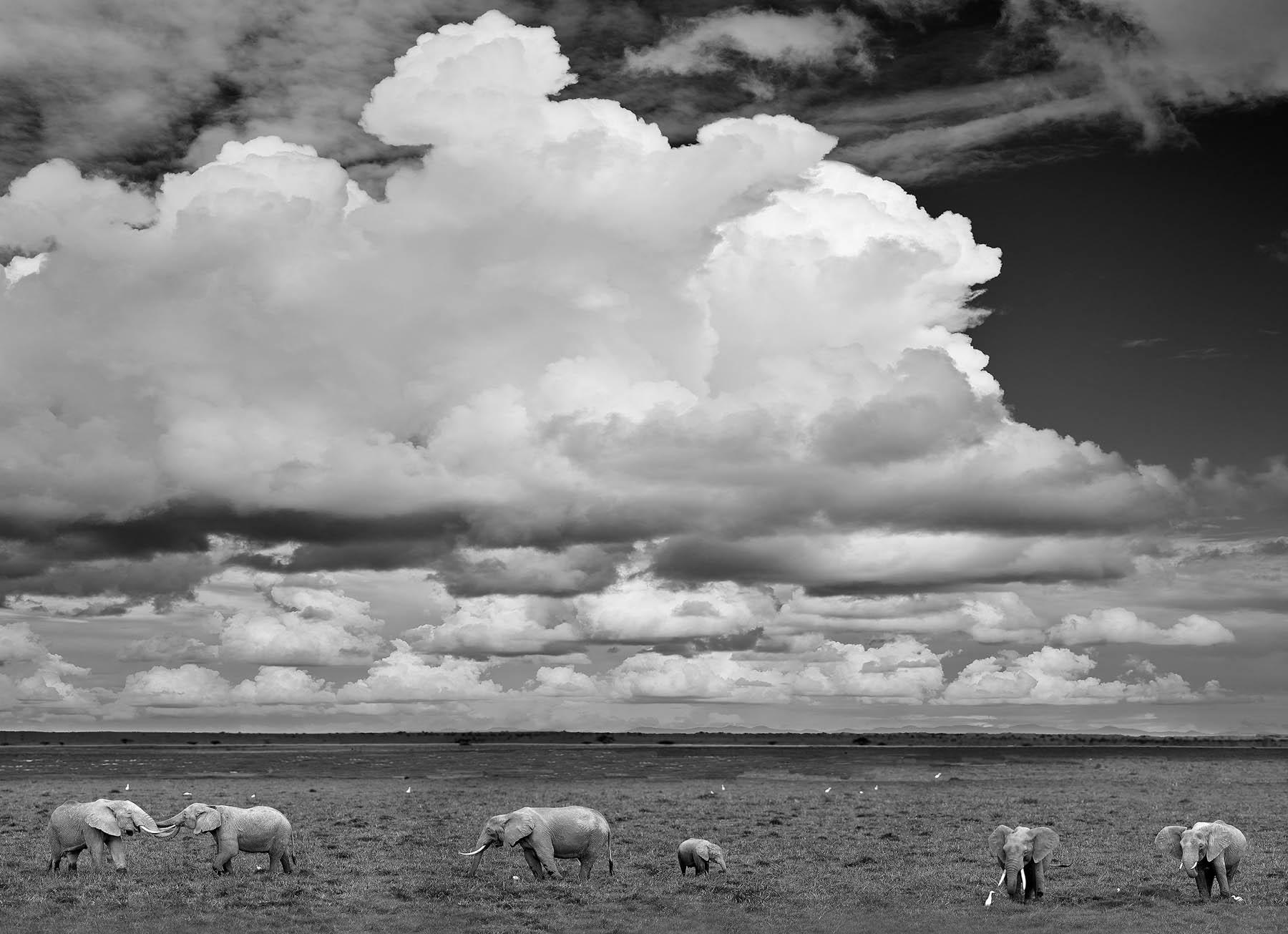Elephant parade, Amboseli National Park, Kenya, Africa.
