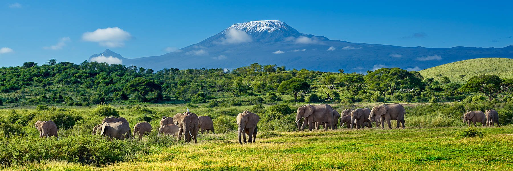 Herd of elephants with Mount Kilimanjaro towering in the background, Kenya, Africa.
