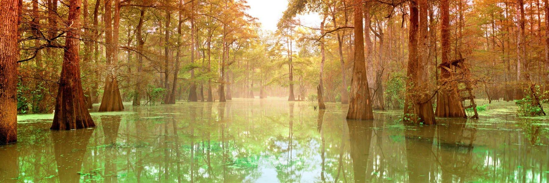 A misty morning in the bayou, Louisiana, USA.
