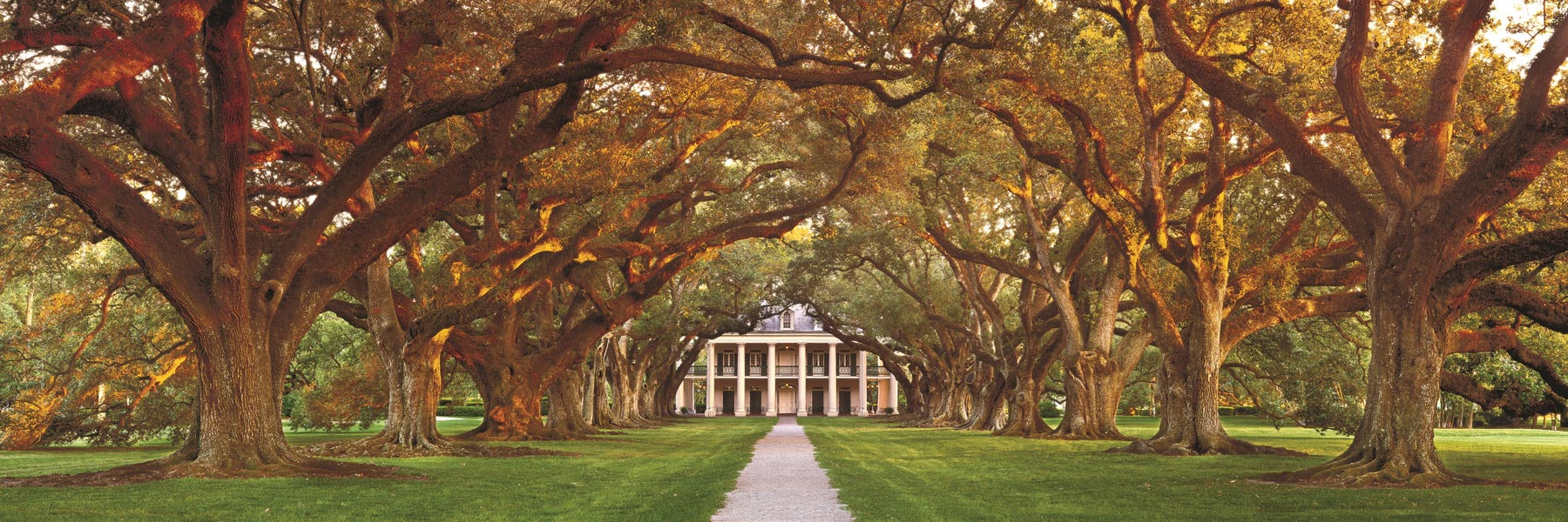 Massive oak trees form a canopy over the driveway leading up to a stately mansioon in Louisiana, USA.