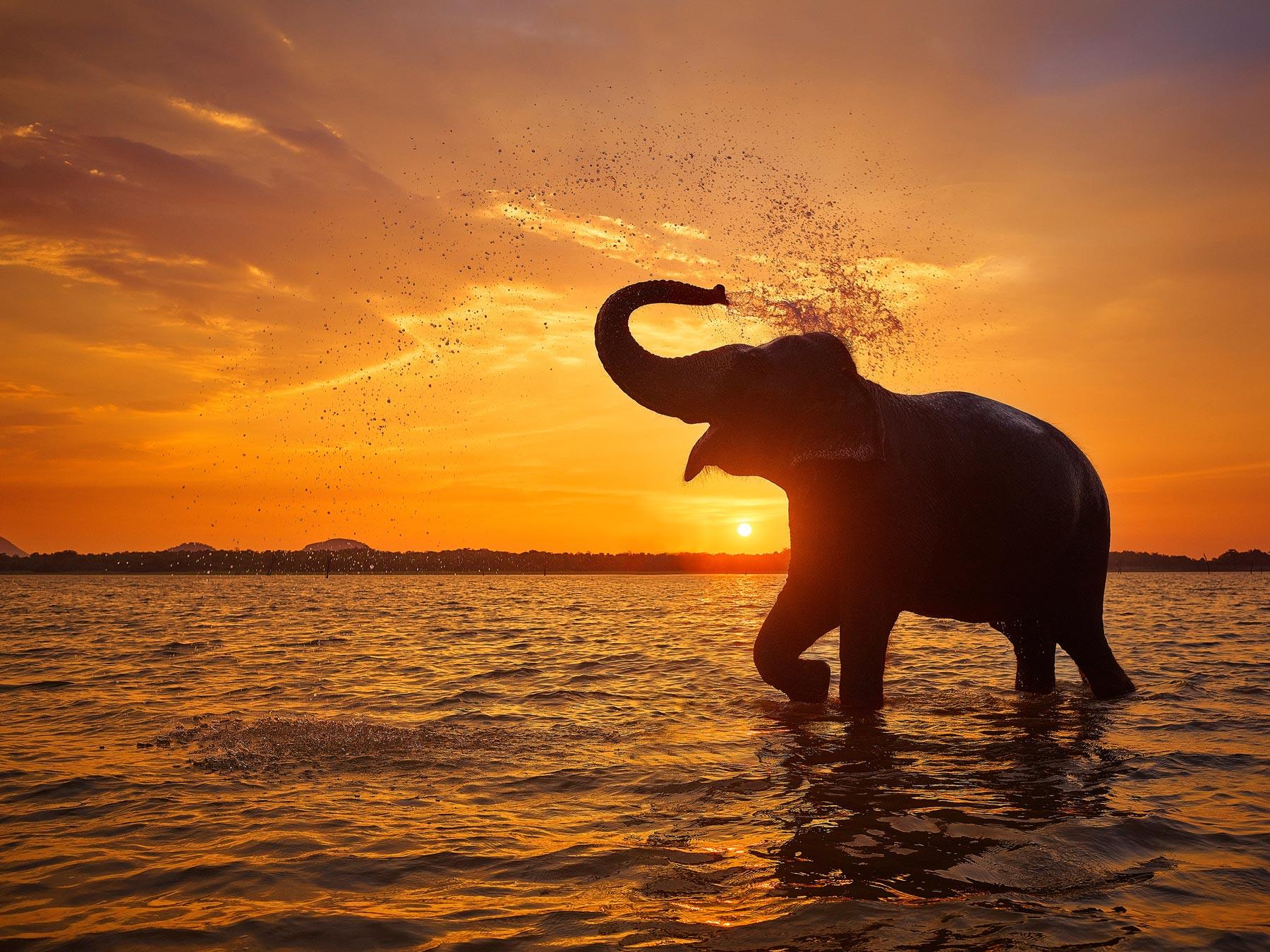 Monica the elephant enjoying a late afternoon bath in Kandalama Reservoir, Sri Lanka.