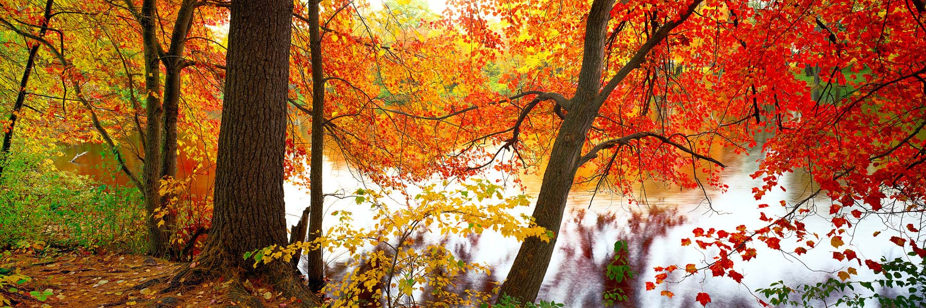 Autumn leaves display their brilliance beside a river in Massachusetts, USA.