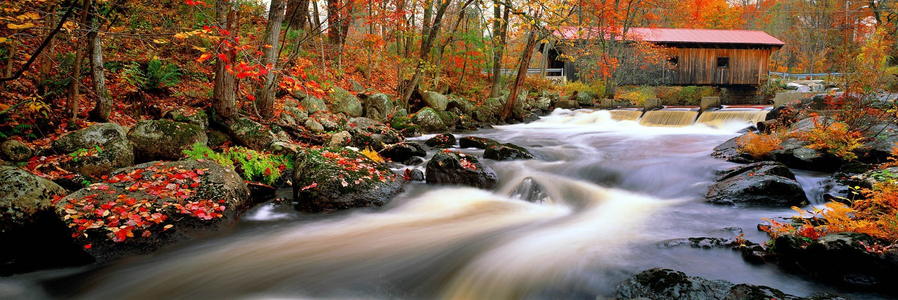 Autumn leaves forming delicate patters on moss-covered rocks beside a whispering stream, New Hampshire, USA.
