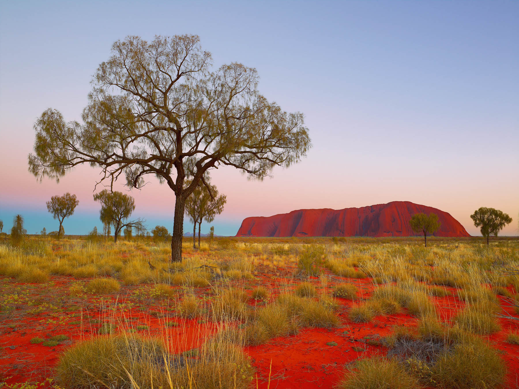 Uluru glowing in the pastel hues of sunset.