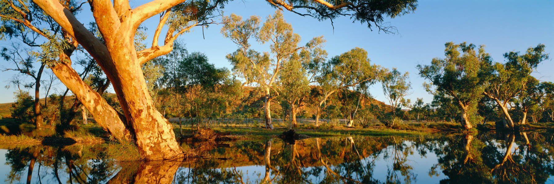 Peace and tranquillity at the waterhole, Jay Creek, NT central Australia.