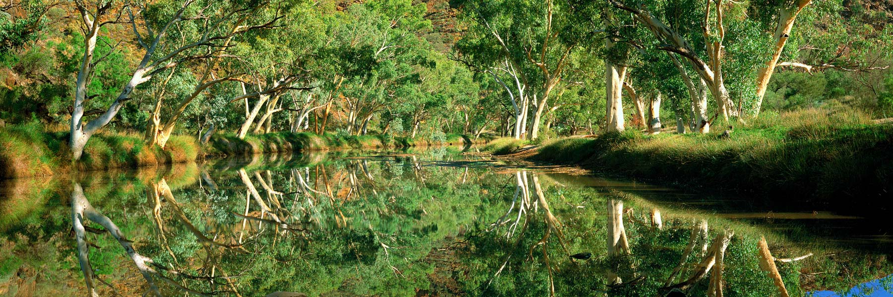 Perfect reflections of river gums lining the banks of Ellery Creek, N, Australia.