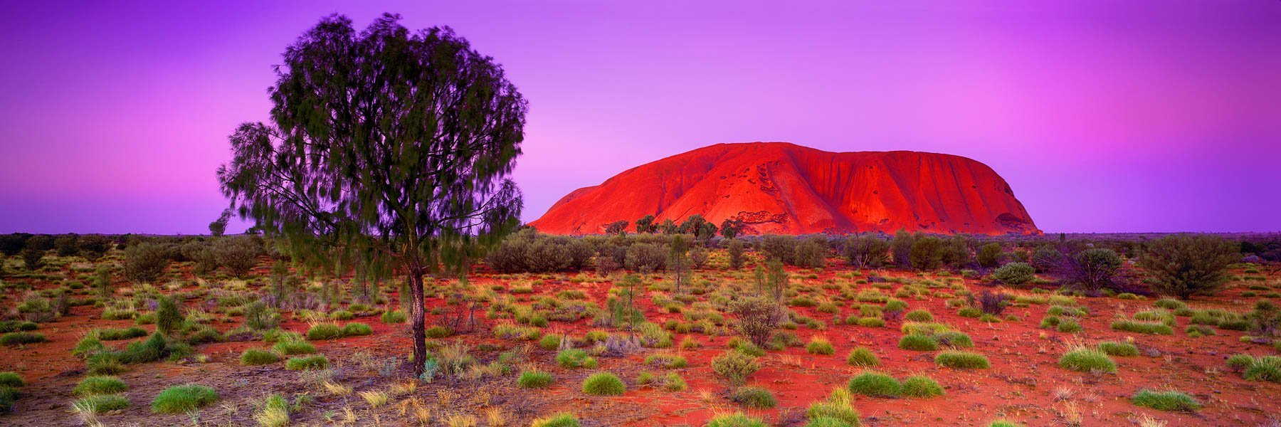 Uluru glowing deep red in the pastel light of sunset, NT, Australia.