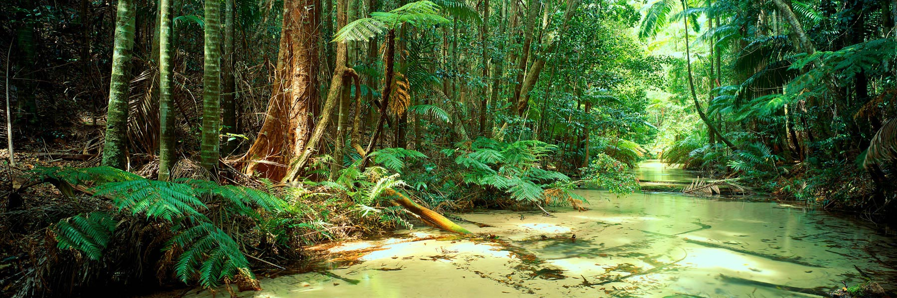 The crystal clear waters of Wanggoolba Creek winding through the tropical rainforest on Fraser Island, Qld, Australia.