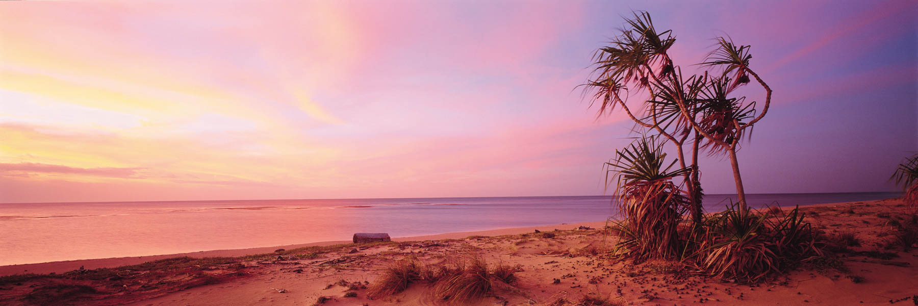 Palm fronds sway in the breeze as evening arrives with a magnificent display of pastel light, Mapoon, Qld, Australia.