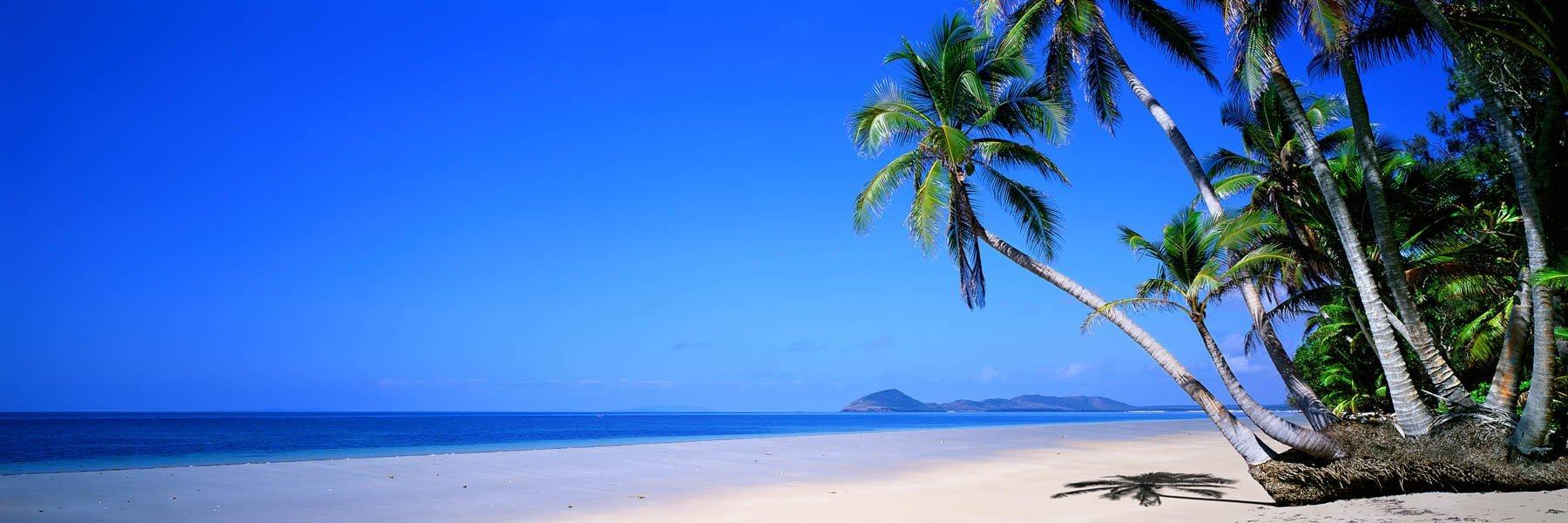 Palm trees on Chilli Beach, Cape York, Qld, Australia.