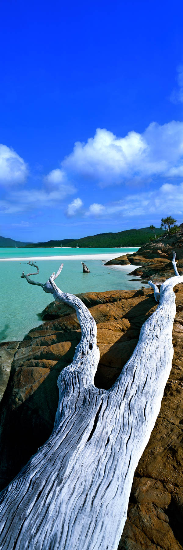 A fallen tree leading the viewer in to the pure white sands o Hill Inlet, Whitsundays, Qld, Australia.