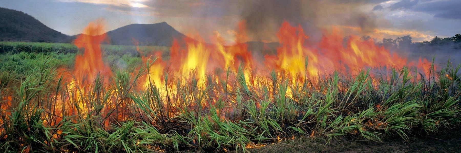 Burning sugar cane, north Queensland, Australia.