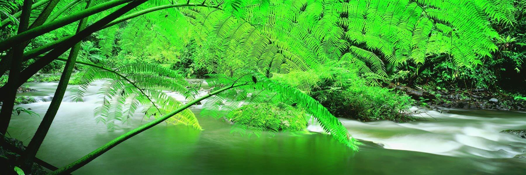 Lush ferns framing Douglas Creek in Palmerston National Park, Qld, Australia.