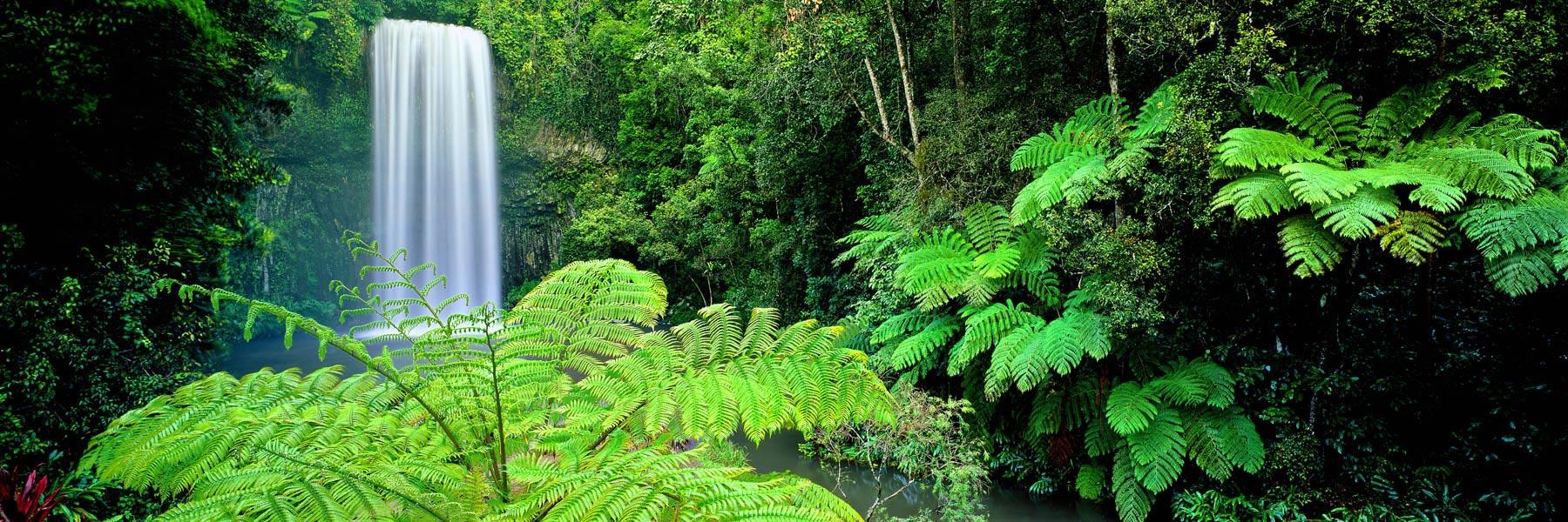 Millaa Millaa Falls, Atherton, Tableland, Qld, Australia.
