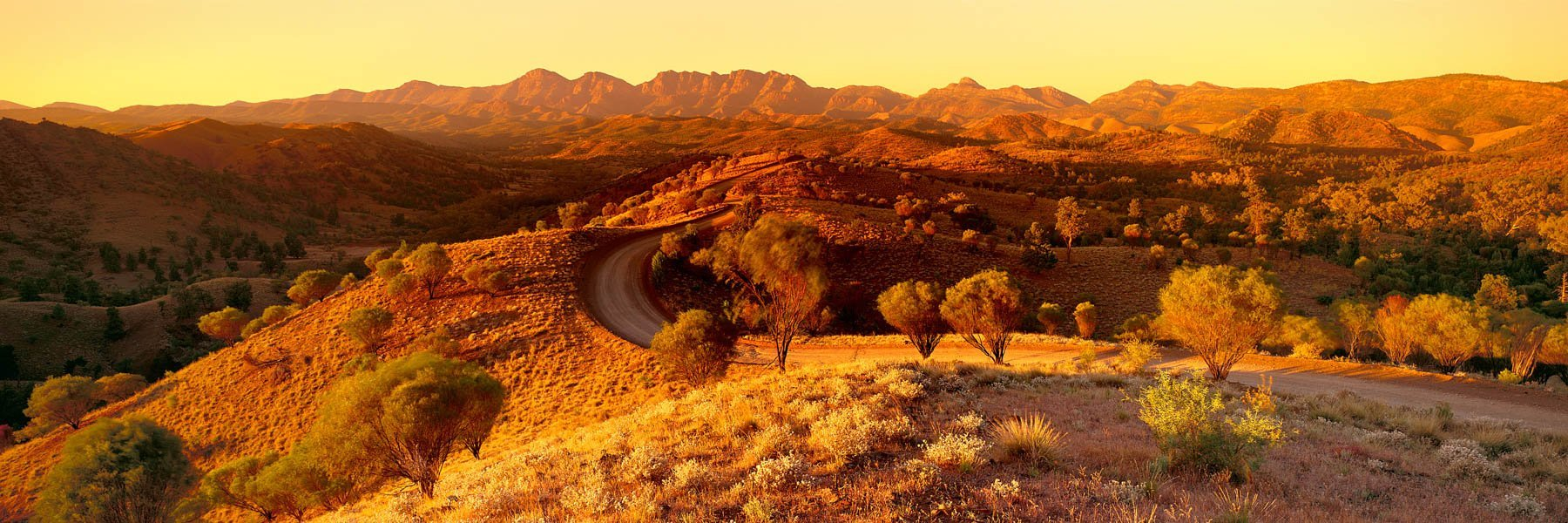 A golden glow over The Flinders Ranges as the rising sun starts to gather heat, SA, Australia.