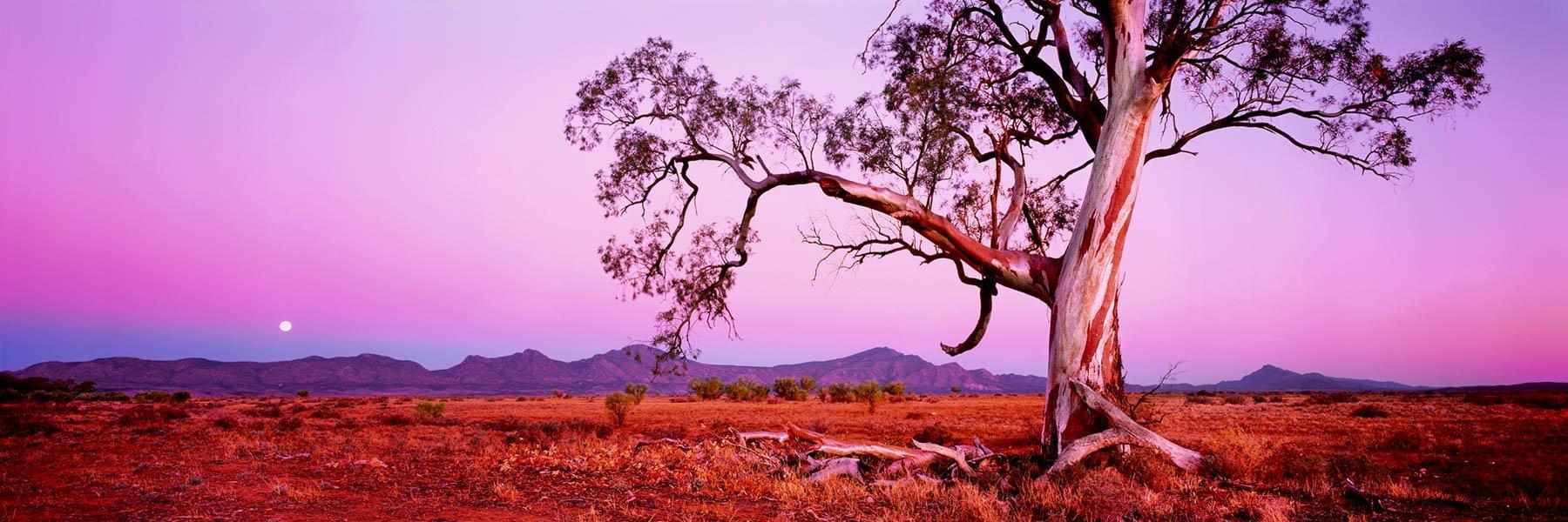 Pastel twilight glow over Flinders Ranges, SA, Australia.