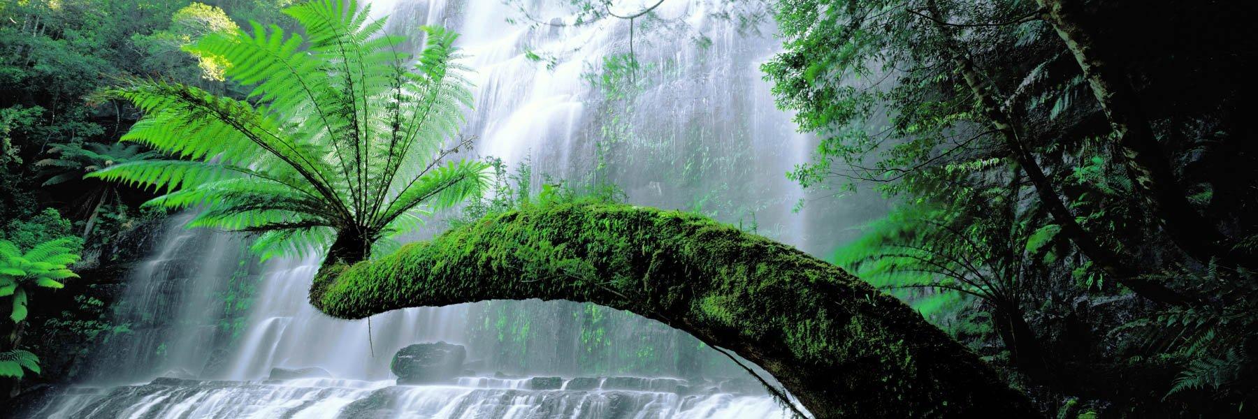 Plunging water forming a gossamer veil behind an ancient tree fern, Russell Falls, Tasmania, Australia.