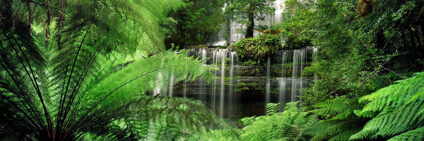 Tree ferns surrounding Russell Falls, Tasmania, Australia.