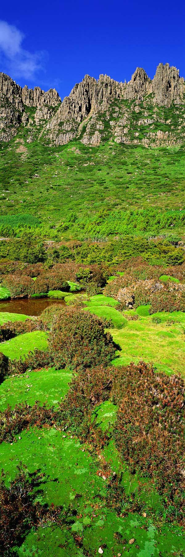 Alpine shrubs and moss below the peaks of Cradle Mountain, Tasmania.