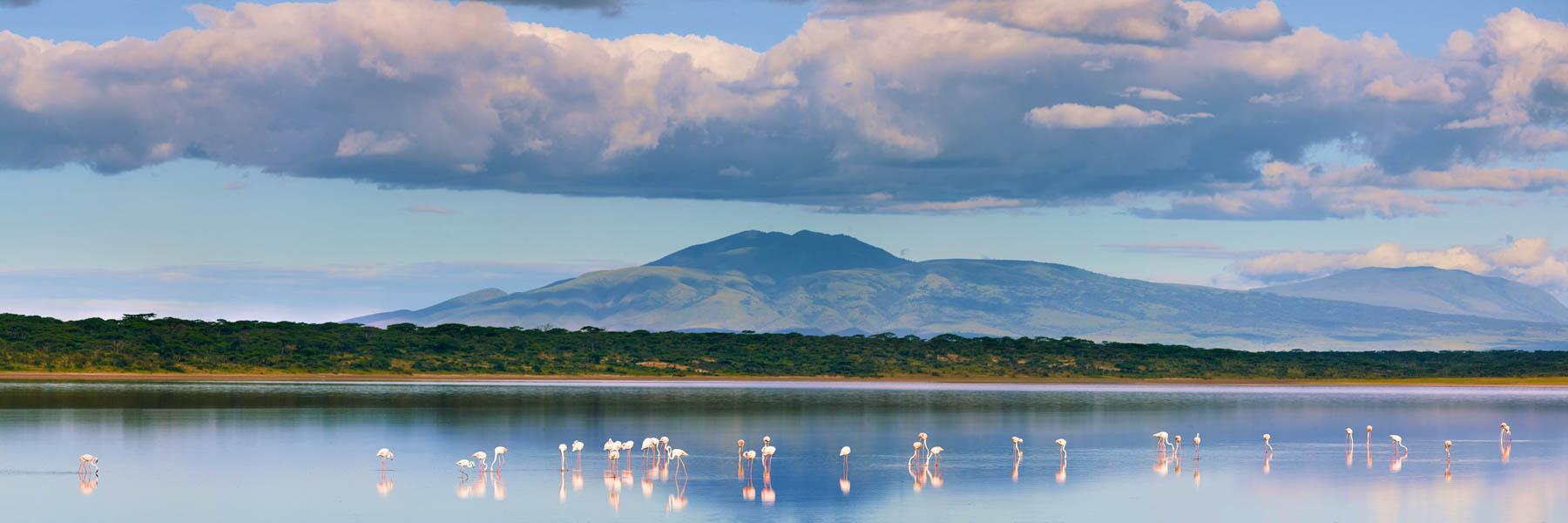 Flamingoes feeding in the shallows of Lake Masek, Tanzania.