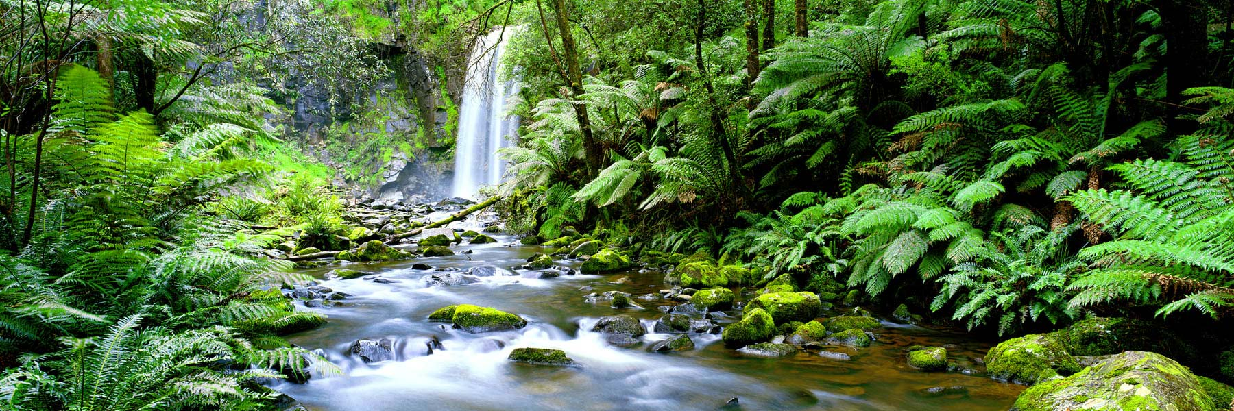 Water as smooth as velvet glides over moss-covered rocks in the Aire River, Vicroria, Australia.