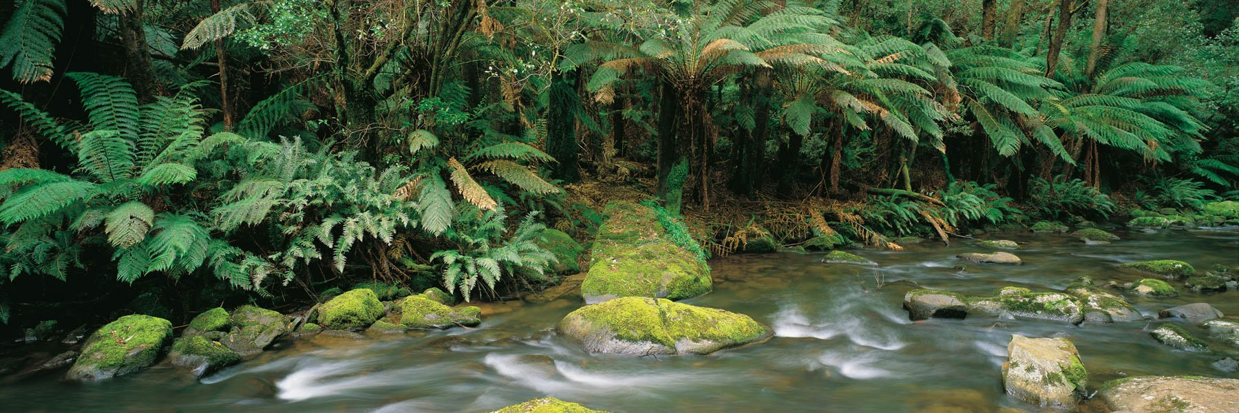 Aire River flowing through the rainforest, Cape Otway, Victoria, Australia