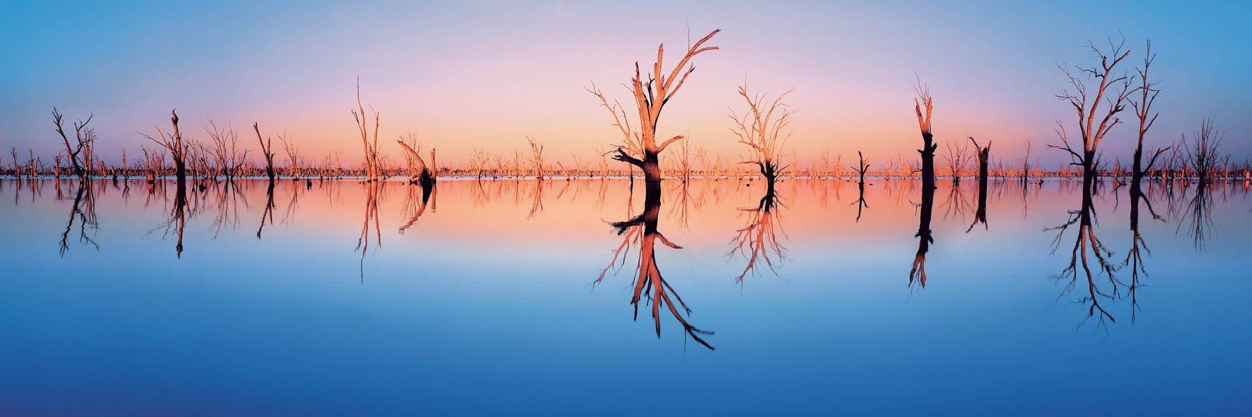 Dead trees in flooded lake Mulwala, Yarrawonga, Victoria, Australia.