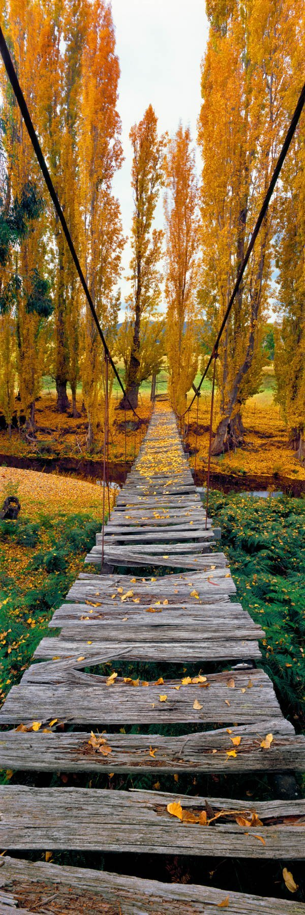 Trees resplendent in autumn colours frame an old suspension bridge over Swifts Creek, Omeo, Victoria, Australia.