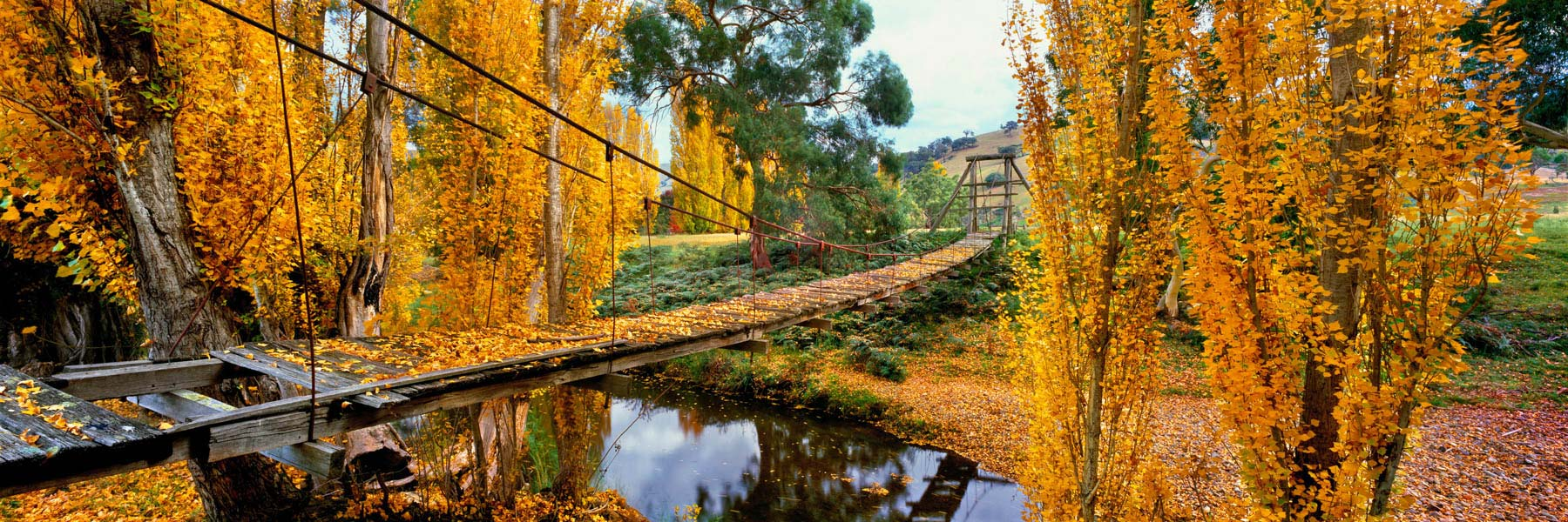 Trees with golden autumn leaves framing an old swing bridge across Swifts Creek, Victoria, Australia.