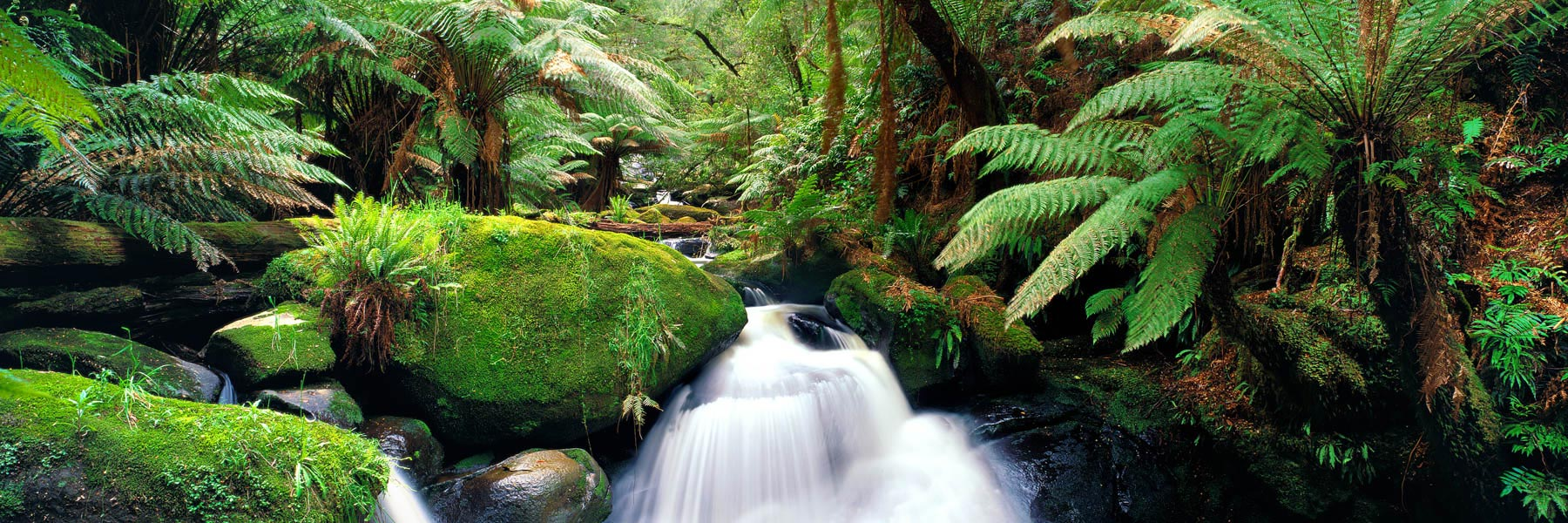 Water flows like a gossamer veil over rocks and moss, Young Creek, Victoria, Australia.