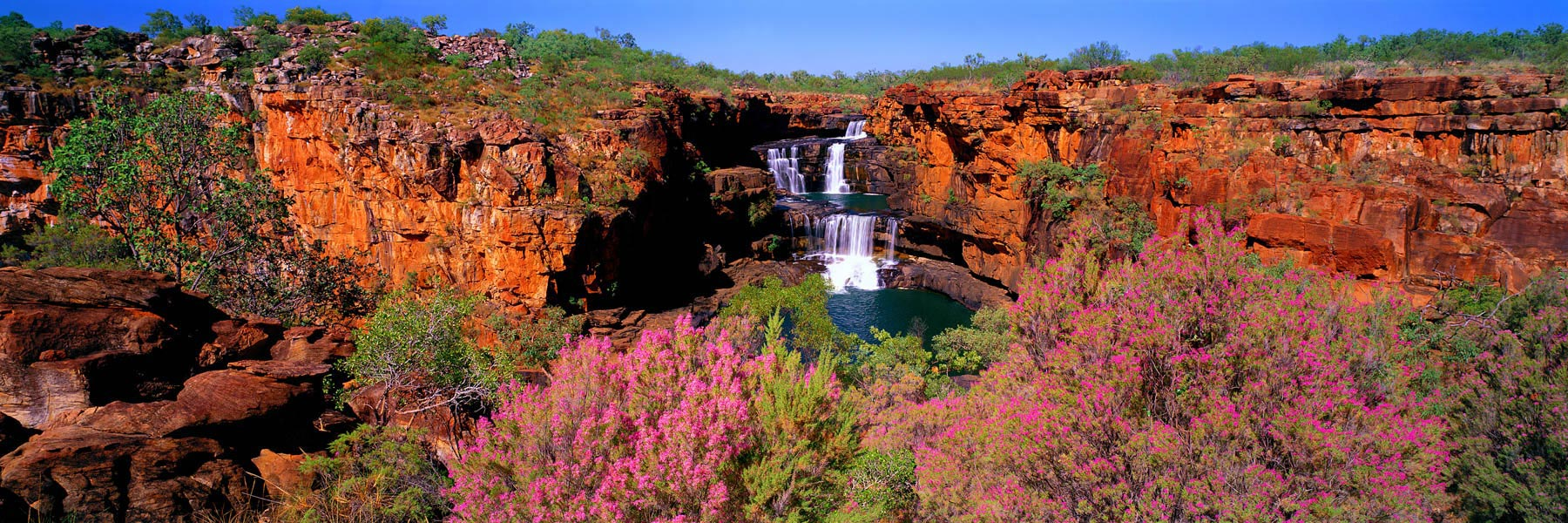 Spring wildflowers blooming at the top of Mitchell Falls, Kimberleys, WA, Australia.
