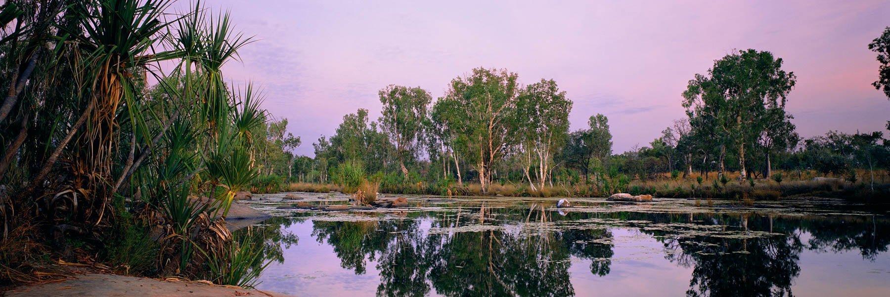 Pandanus palms and trees surrounding Manning Gorge, Kimberley, WA, Australia.