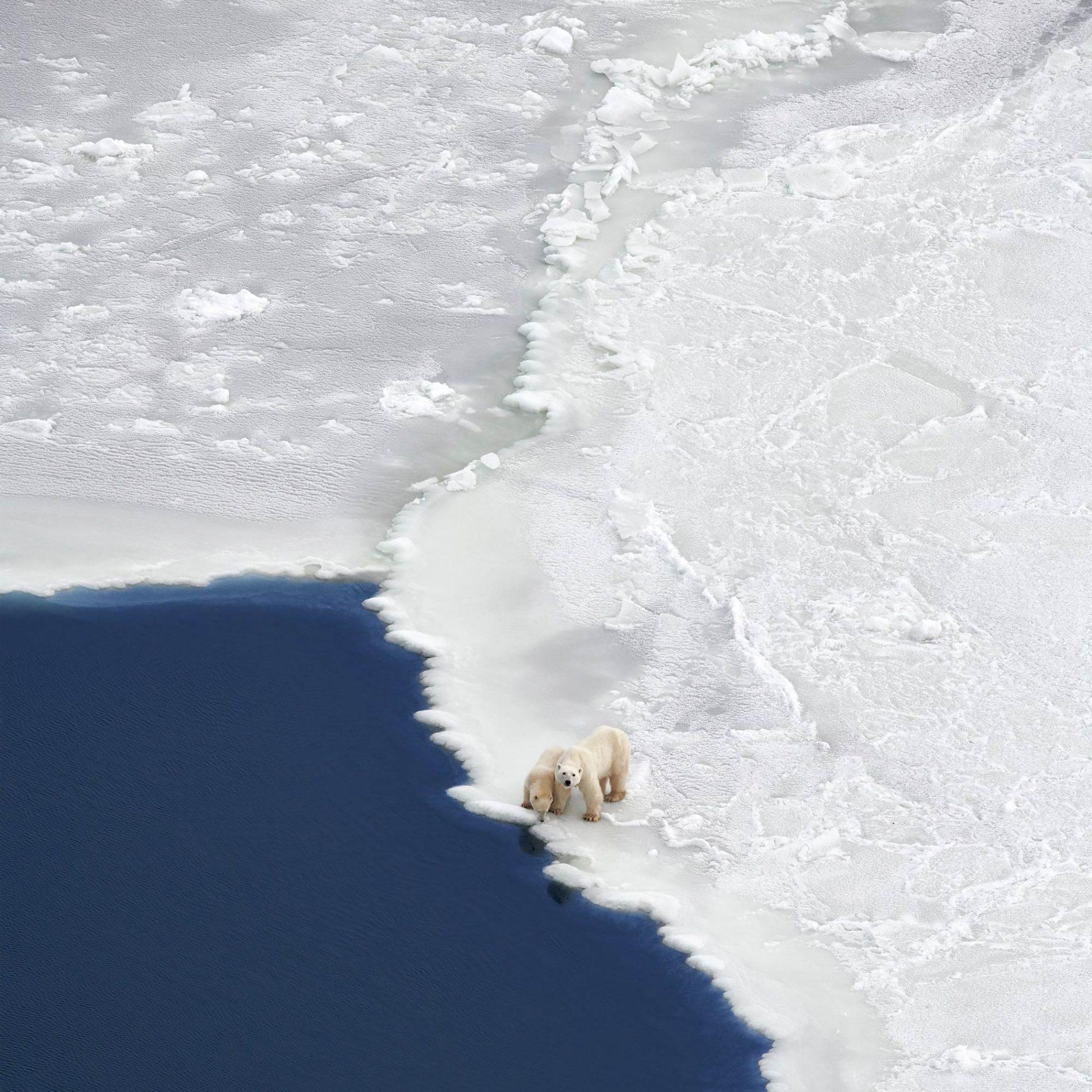 Polar bears on the edge of an ice shelf