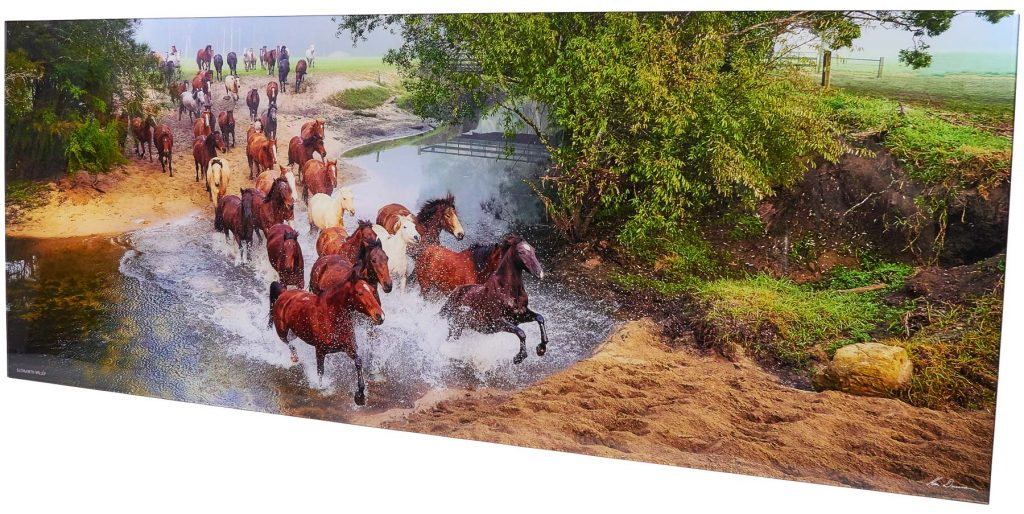 Brumbies Running through the river on a Crystal Mount Front