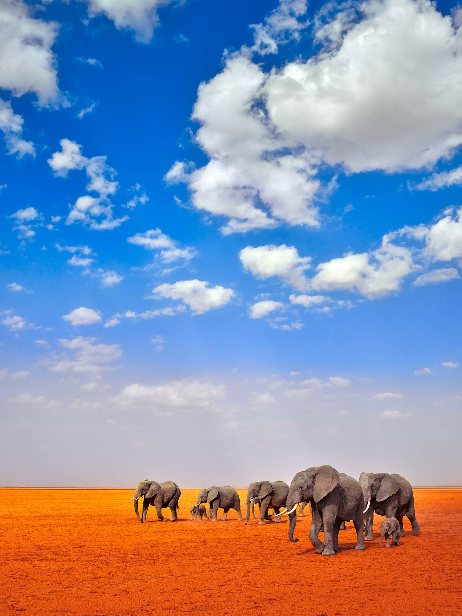 a family of elephants walking across red earth below a bright blue sky