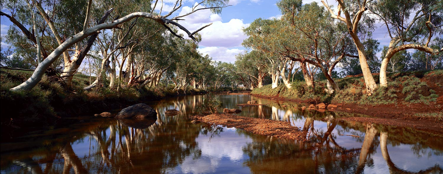 Reflections of river gums in Butchers Creek, Qld, Australia.