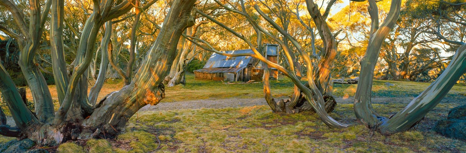 Wallace Hut and snow gums lit up by golden late afternoon light, Falls Creek, Victoria, Australia.